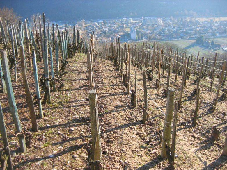 Les vignes Farette