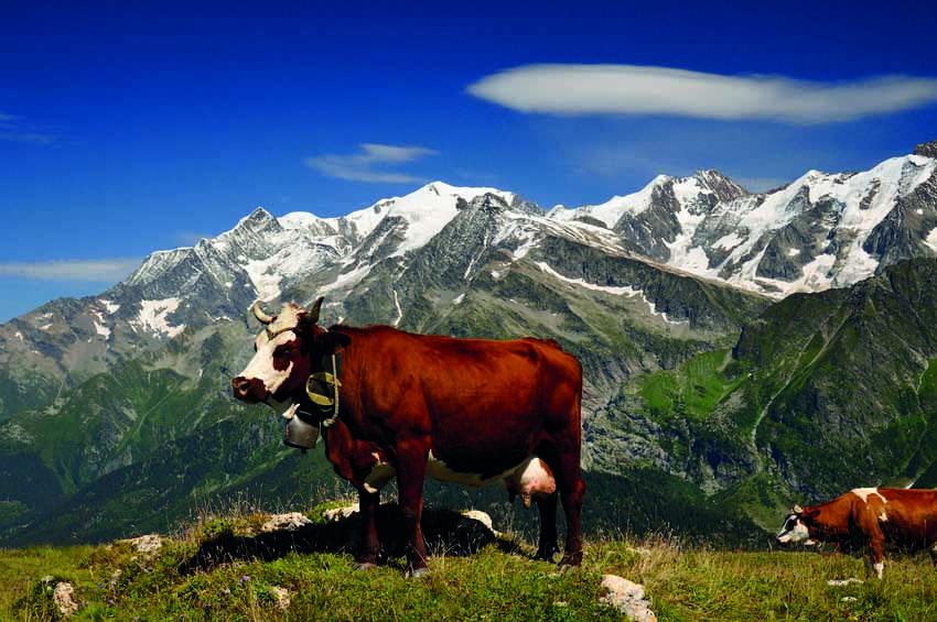 Marguerite et Mont Blanc